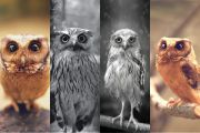 owls know everything preview.jpg